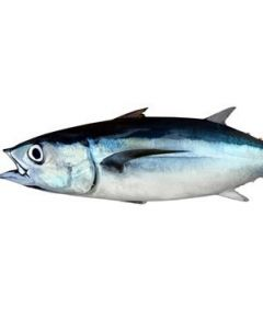 Albacore Tuna NZ Whole 4-5kg+/Frozen