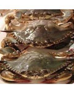 Crab Soft Shell 50/70 1kg/Frozen