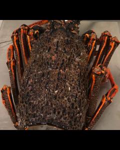 Crayfish Bodies & Heads (Extra Large Grade) 2kg/Frozen