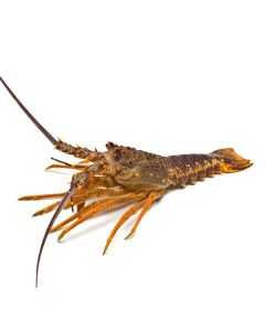 Crayfish NZ Whole (800g-1kg) 1kg/Frozen