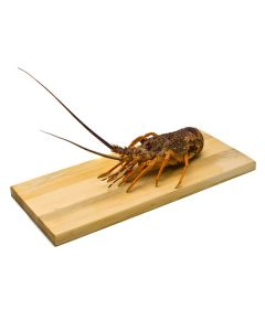 Crayfish Live NZ Grade E 2kg