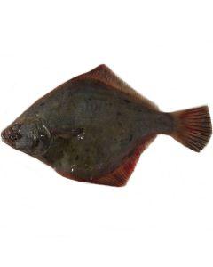 Sand Flounder Gutted 1kg/Fresh