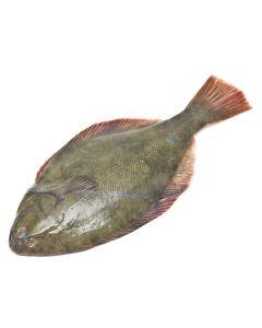 Yellowbelly Flounder Gutted 1kg/Fresh