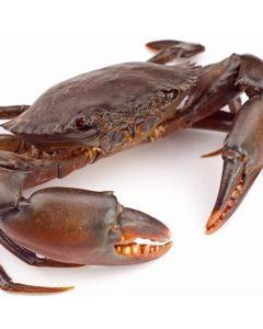 Mud Crab Whole Raw (300/500) 1kg/Frozen
