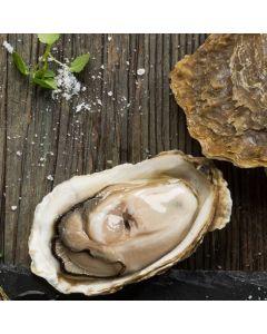Oysters Pacific Coromandel Live 10 Dozen/Fresh