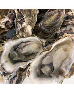 Oysters Pacific 6Acre (Mahurangi) Live 2 Dozen