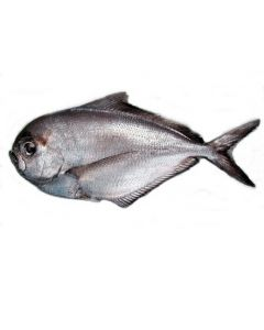 Rays Bream Gilled & Gutted 1kg/Fresh