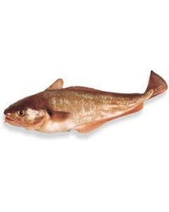 Red Cod Gilled & Gutted 1kg/Fresh