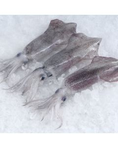 Squid NZ Whole Premium 100g-200g (G5) 1kg/Frozen