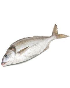 Tarakihi Gilled & Gutted 1kg/Fresh