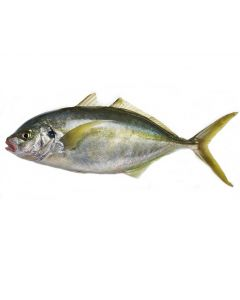Trevally Gilled & Gutted 1kg/Fresh