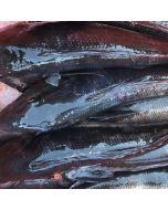 Blue Cod Gilled & Gutted 1kg/Fresh