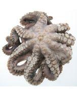 Octopus Whole 2kg/Frozen