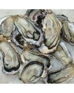 Oysters Pacific Coromandel Half Shell 10 Doz/Fresh