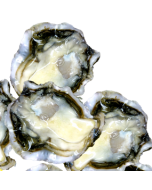 Oysters Pacific Okiwi Bay Half Shell 1 Doz/Fresh