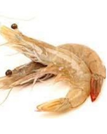 Prawns Whole Tiger Australian U8 1kg/Frozen