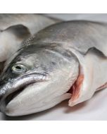 Salmon Mt Cook Alpine Gilled & Gutted 2kg+/Fresh